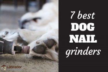 7 Best Dog Nail Grinders