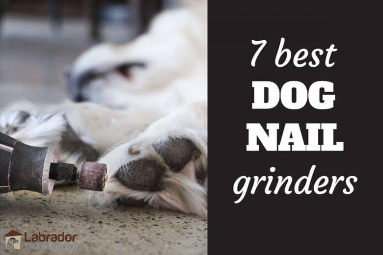 7 Best Dog Nail Grinders - Dremel grinding white dog's nails.