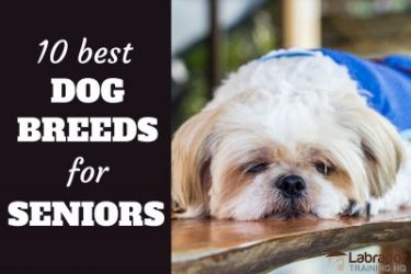 10 Best Dog Breeds For Seniors