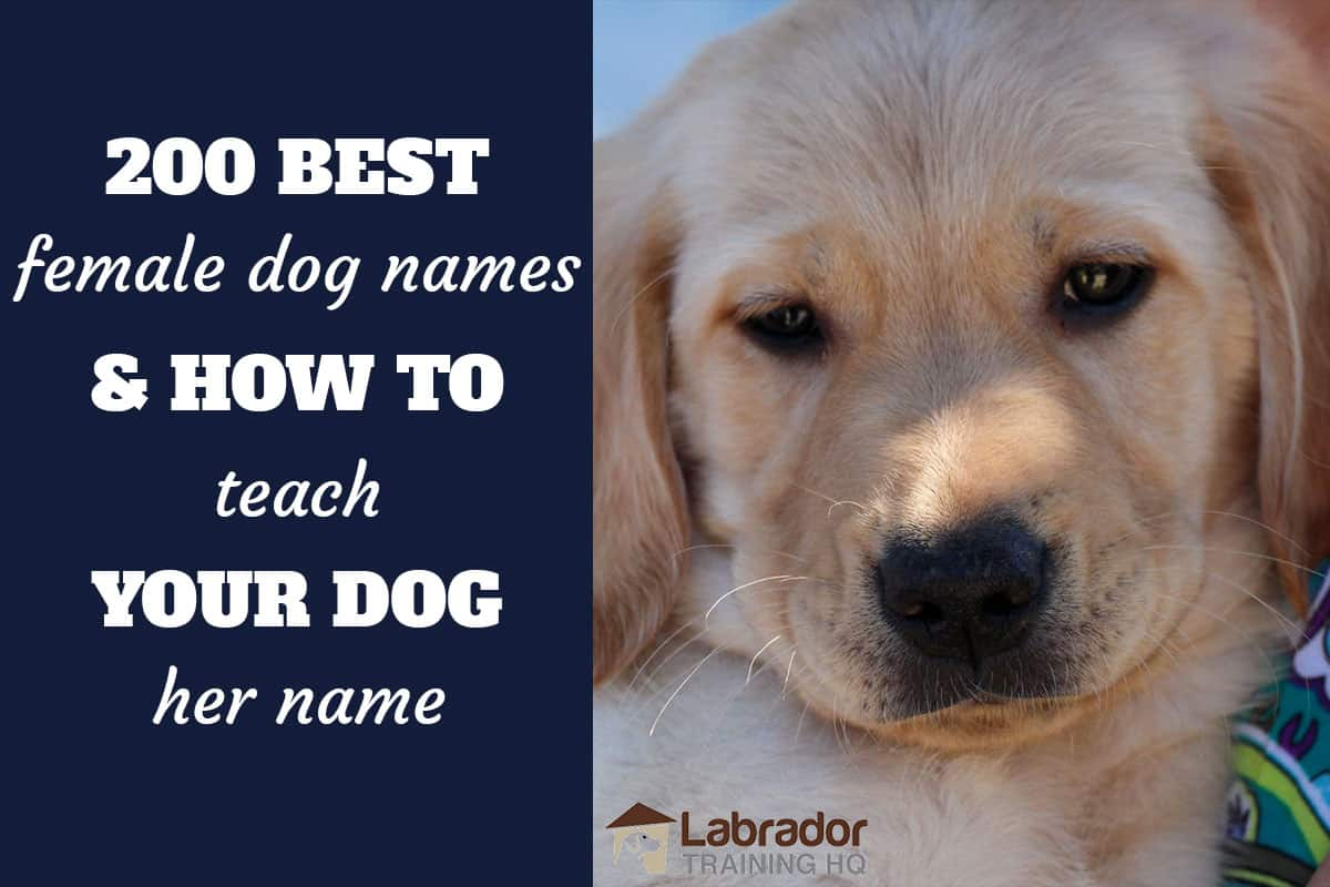 200 Best Female Dog Names And How To Teach Your Dog Their Name
