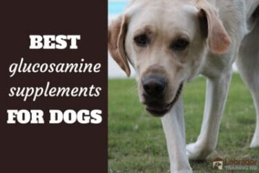 Best Glucosamine Supplements For Joint Pain In Dogs