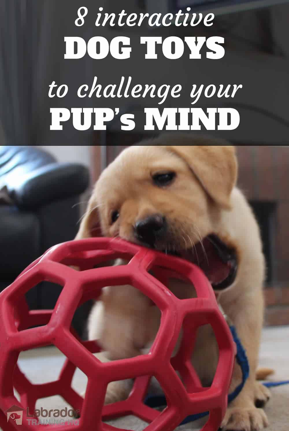 Yellow Lab puppy playing with red honeycomb ball. - 8 best interactive dog toys to challenge your pup's mind.