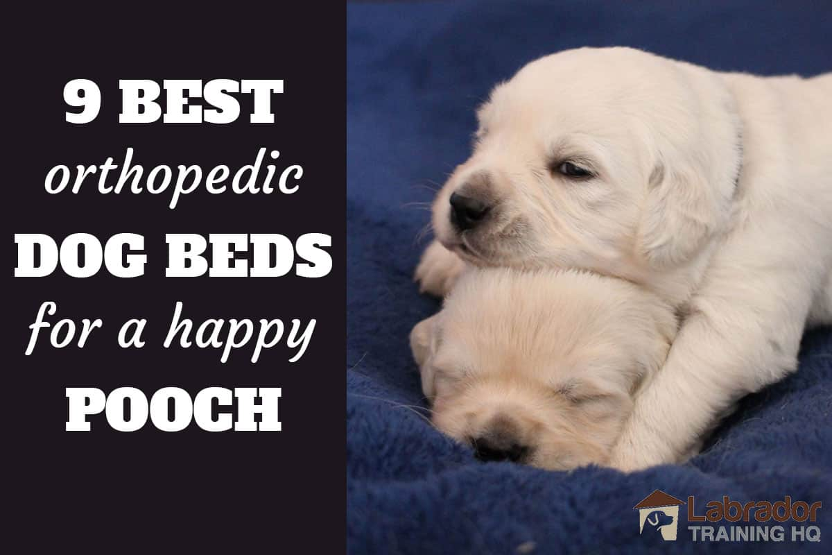 9 Best Orthopedic Dog Beds for a Happy Pooch - White puppy uses others puppies head as his pillow