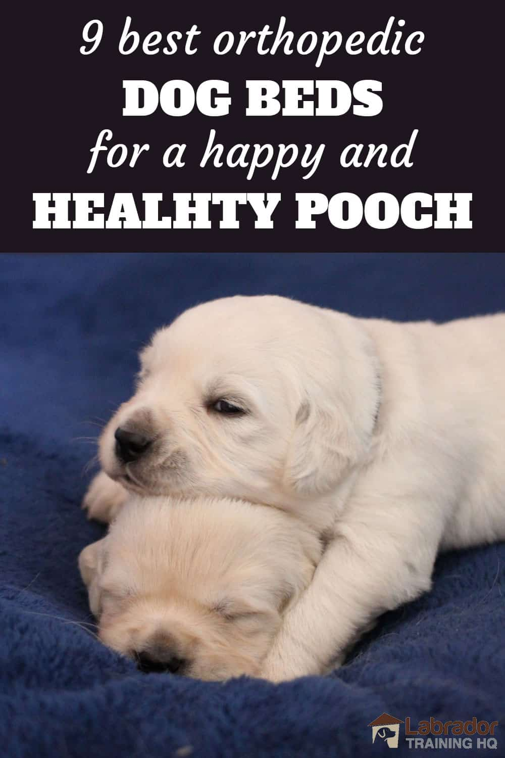 9 Best Orthopedic Dog Beds for a Happy and Healthy Pooch - Two white puppies one lying head on top of others head