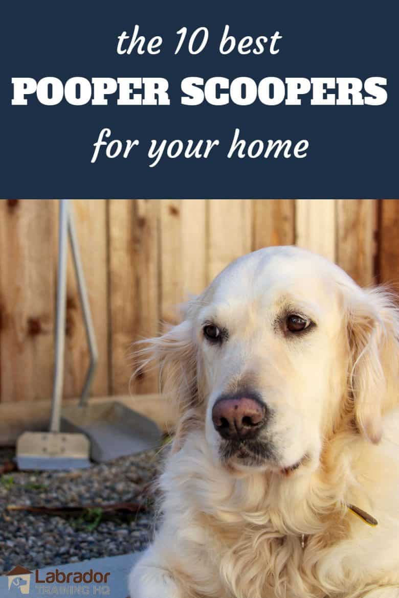 The 10 Best Pooper Scoopers For Your Home - Golden Retriever looking to the side with pooper scooper in the background.