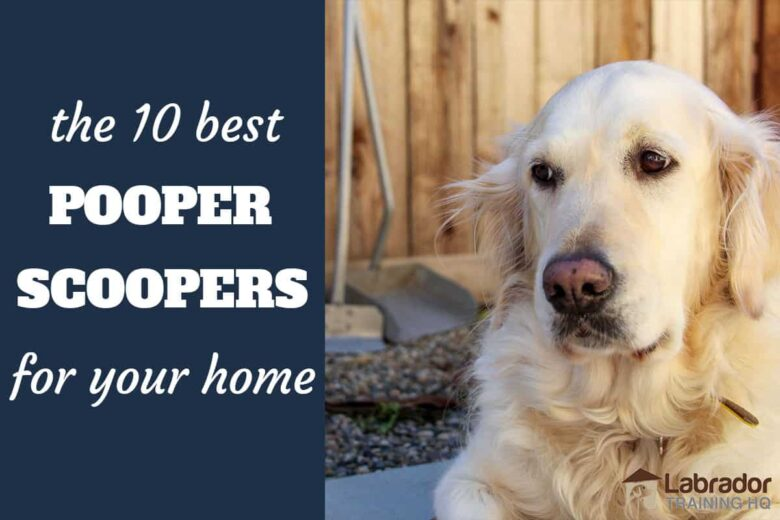 The 10 Best Pooper Scoopers For Your Home - Golden Retriever with pooper scooper in the background