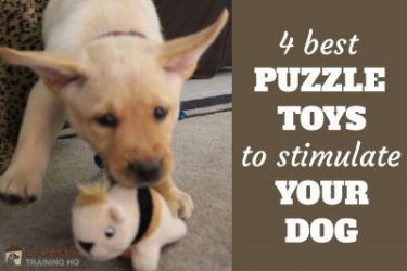 Best Puzzle Toys For Your Dog - Yellow Lab puppy ears flying playing with squirrel toy