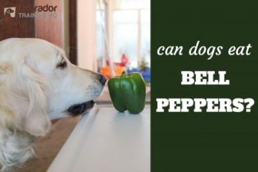 Can Dogs Eat Bell Peppers And Are They Healthy?