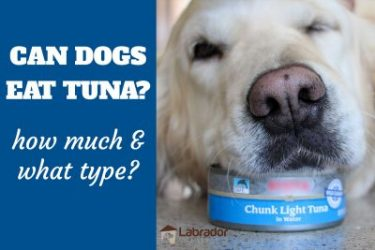 Can Dogs Eat Tuna? How Much And What Type?