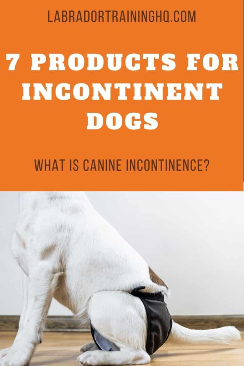 7 Products For Incontinent Dogs - What Is Canine Incontinence? Mixed breed dog sitting on wood floor wearing a doggy diaper.