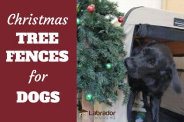 4 Best Christmas Tree Fences For Dogs - How To Keep Your Dog Away From The Tree
