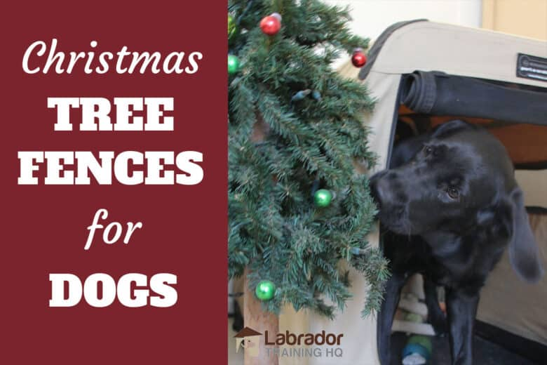 Christmas Tree Fences For Dogs - Black Labrador Retriever biting at Christmas tree.