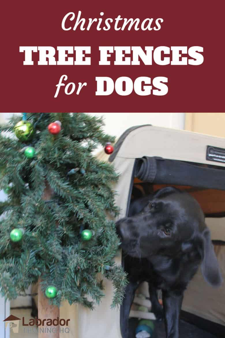 Christmas Tree Fences For Dogs - Black Lab puppy biting at fake Christmas tree.