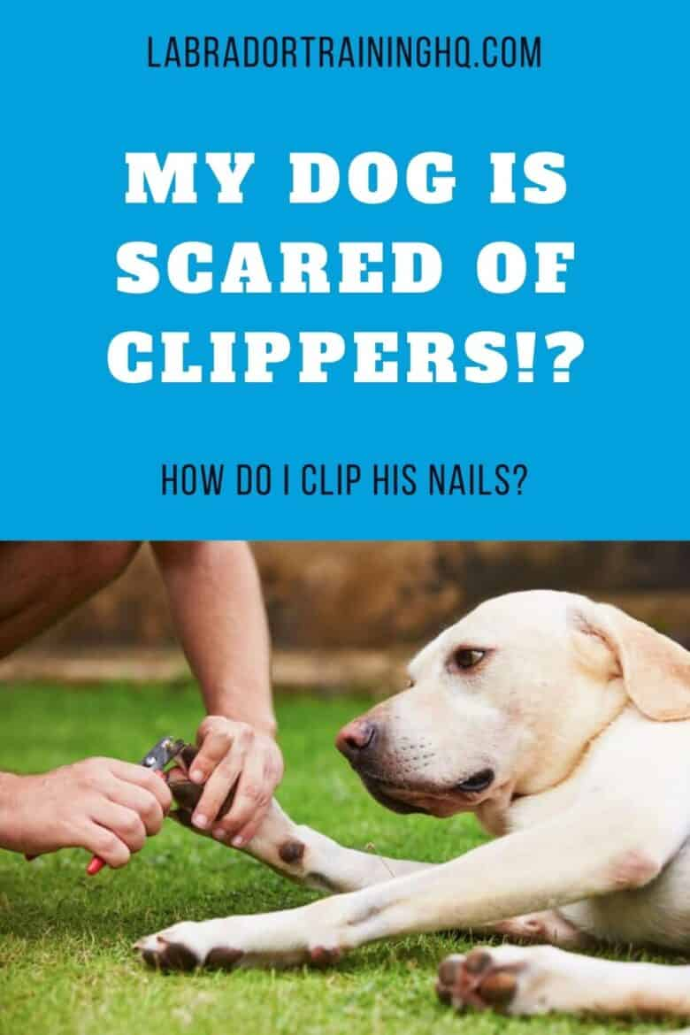My Dog Is Scared of Clippers!? How Do I Clip His Nails? Yellow Lab lying on grass getting nails clipped.