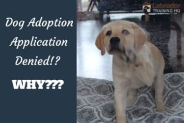 9 Main Reasons For Not Being Approved For Pet Adoption