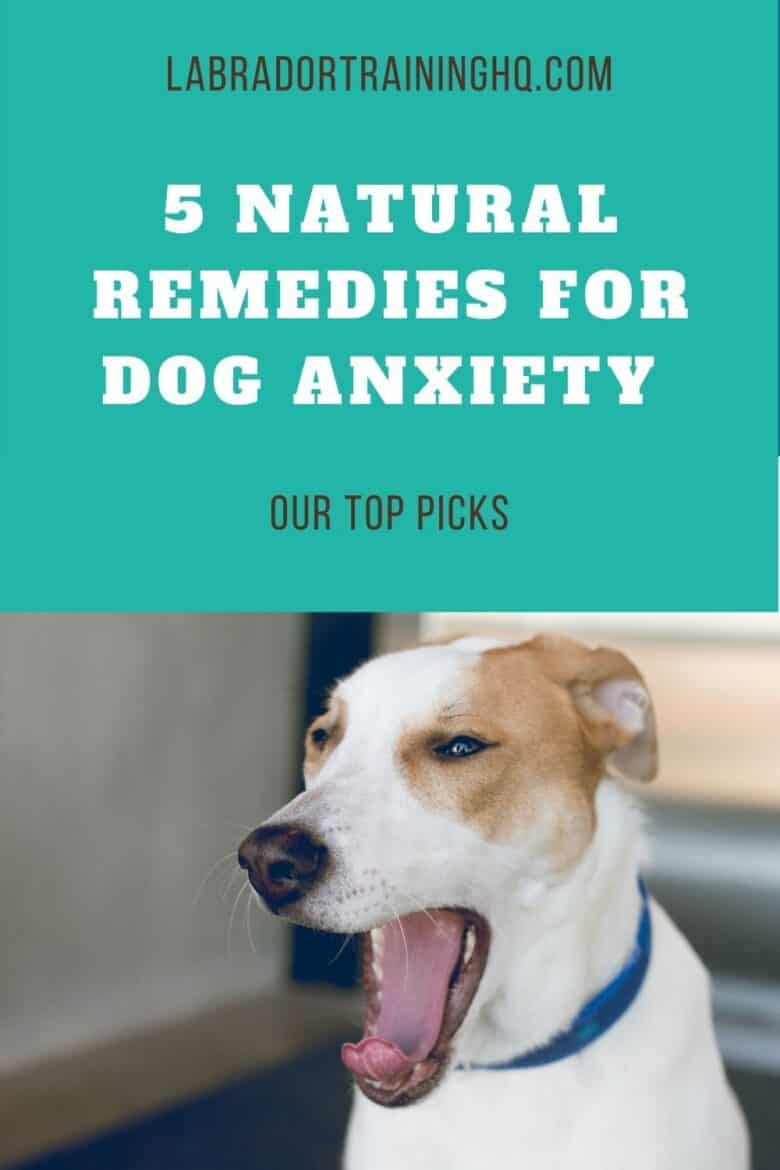 5 Natural Remedies For Dog Anxiety - Mixed breed dog yawns and pulls his ears back showing signs of anxiety.