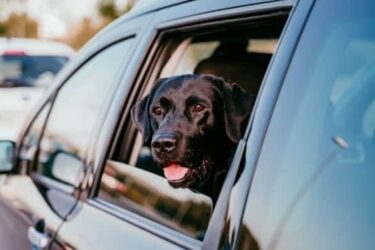 3 Safest Ways for Your Dog To Travel in the Car