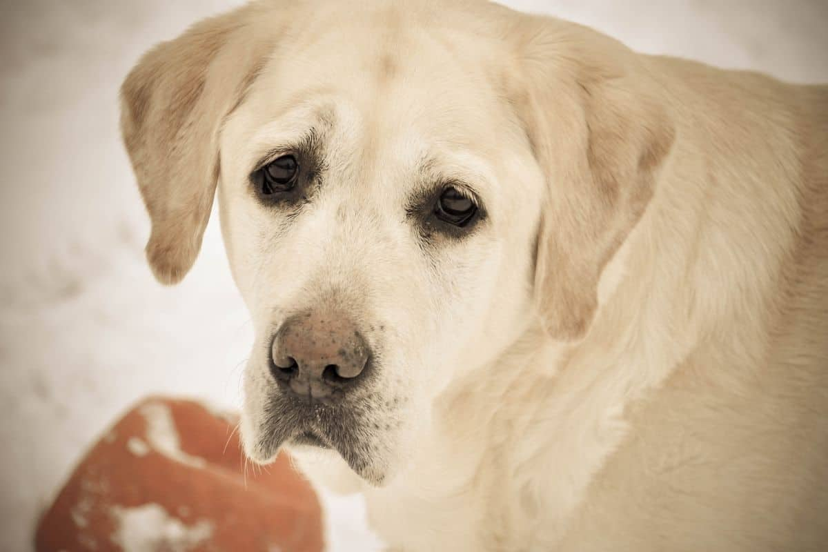What You Can Do About Old Dog Incontinence