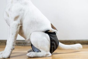 Essential Products For Managing Incontinent Dogs