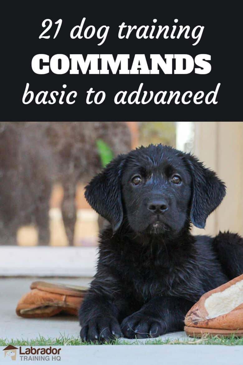 21 Dog Training Commands - Basic To Advanced - Wet black Lab puppy in a perfect down stay next to brown slippers.