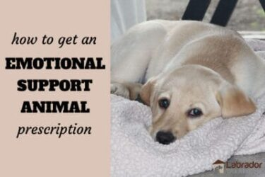 How To Get An Emotional Support Animal Prescription
