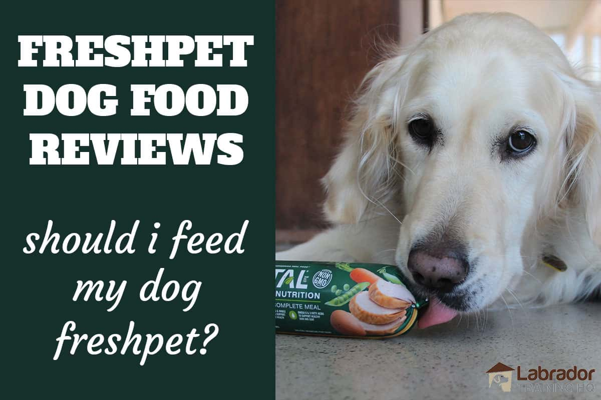 Freshpet Dog Food Reviews - Should I Feed My Dog Freshpet? Golden Retriever licking at Freshpet Dog Food Roll.