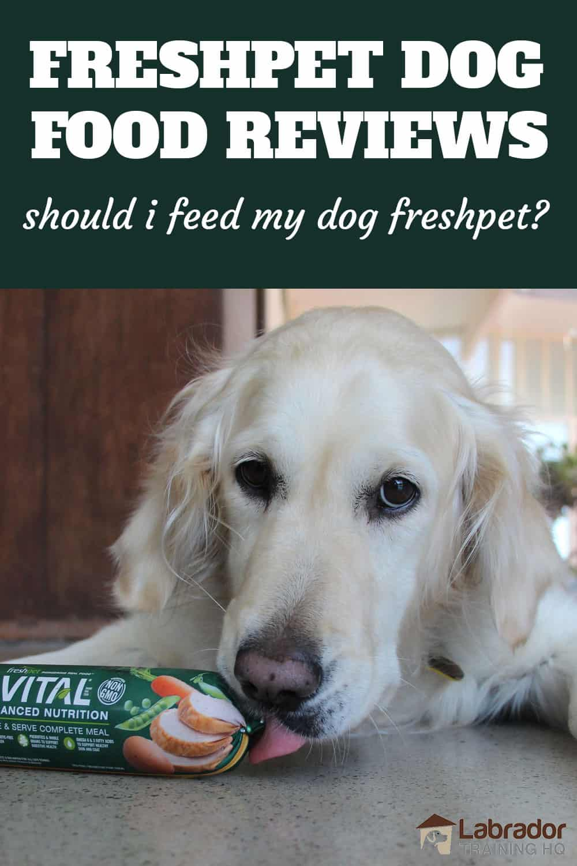 Freshpet Dog Food Reviews - Should I Feed My Dog Freshpet - Golden Retriever licks at Freshpet food roll