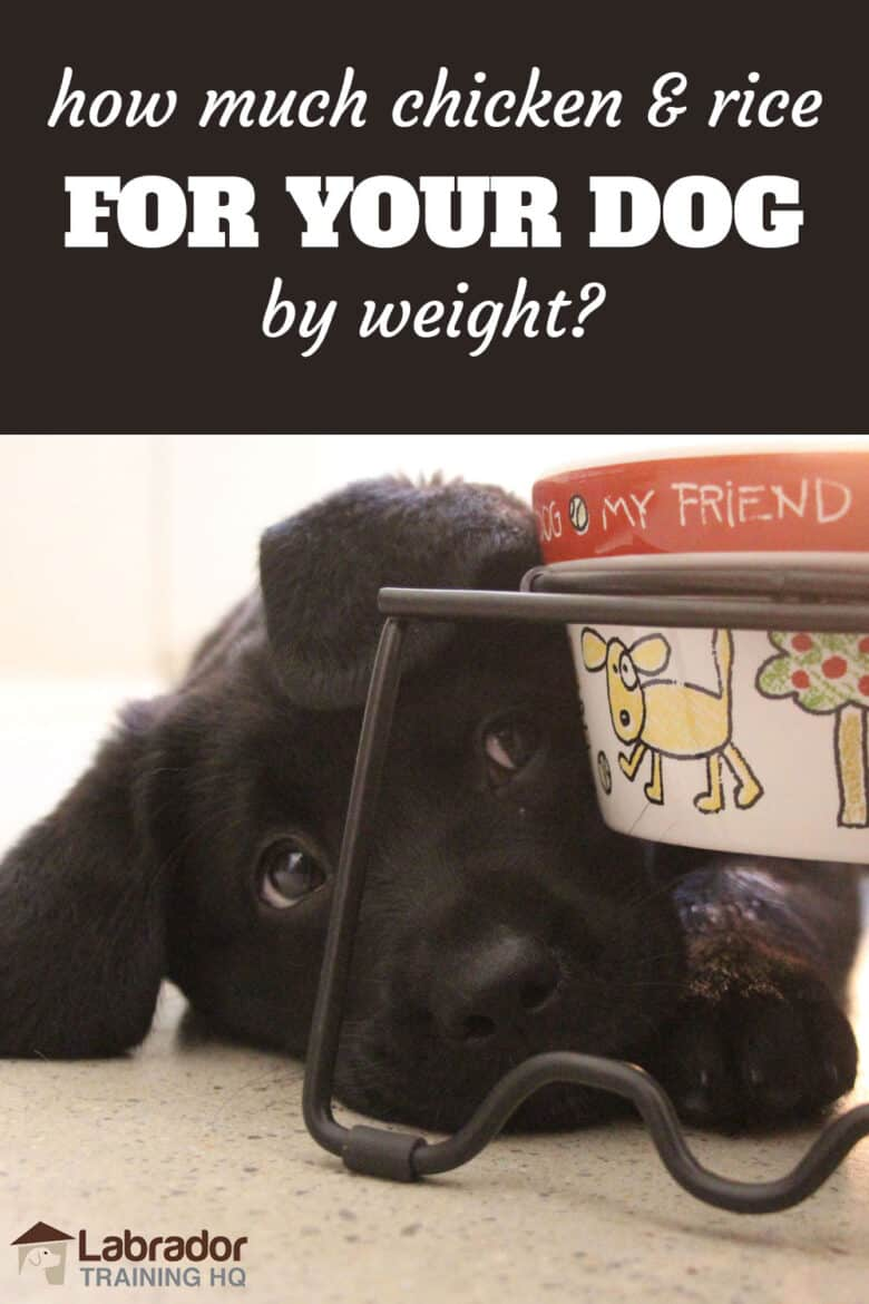 How Much Chicken & Rice For Your Dog By Weight? Black Lab puppy lying down underneath/beside his bowl with cartoon drawn dog