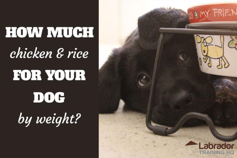 How Much Chicken & Rice For Your Dog By Weight? - Black Lab puppy lying on the floor looking up at dog bowl with crayon drawn images.