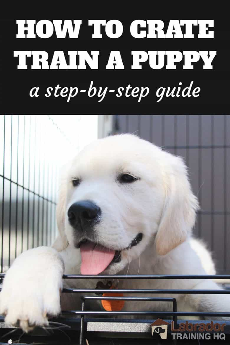 How To Crate Train A Puppy - A Step By Step Guide - White Golden Retriever puppy lying down in his crate with the door open.