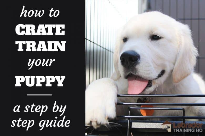 How To Crate Train Your Puppy - A Step By Step Guide - White Puppy lying down in a crate.