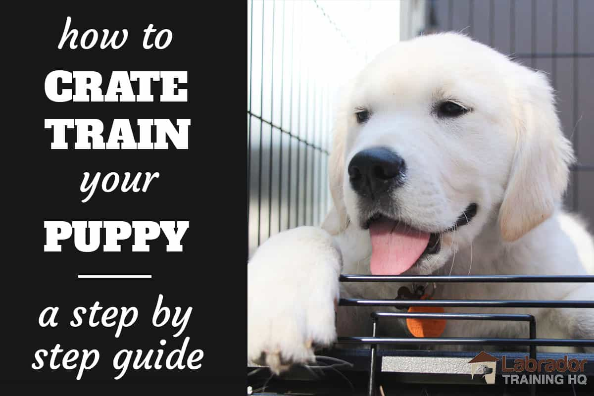How To Crate Train A Puppy Day Night