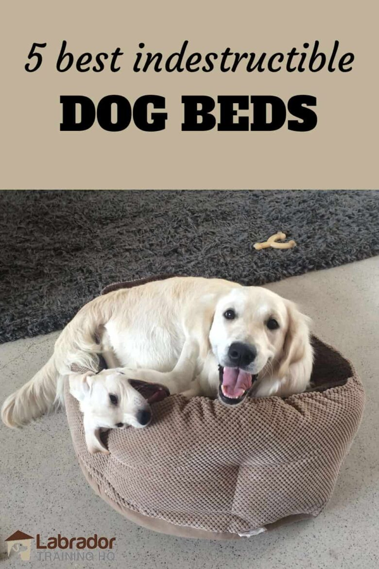 5 Best Indestructible Dog Beds - White Labrador puppy wrestles with English Cream Golden Retriever inside a small brown dog bed.