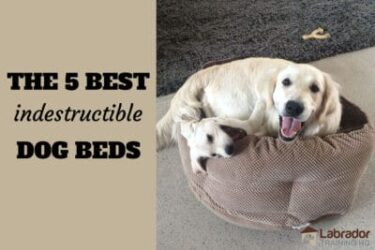 5 Best Indestructible Dog Beds