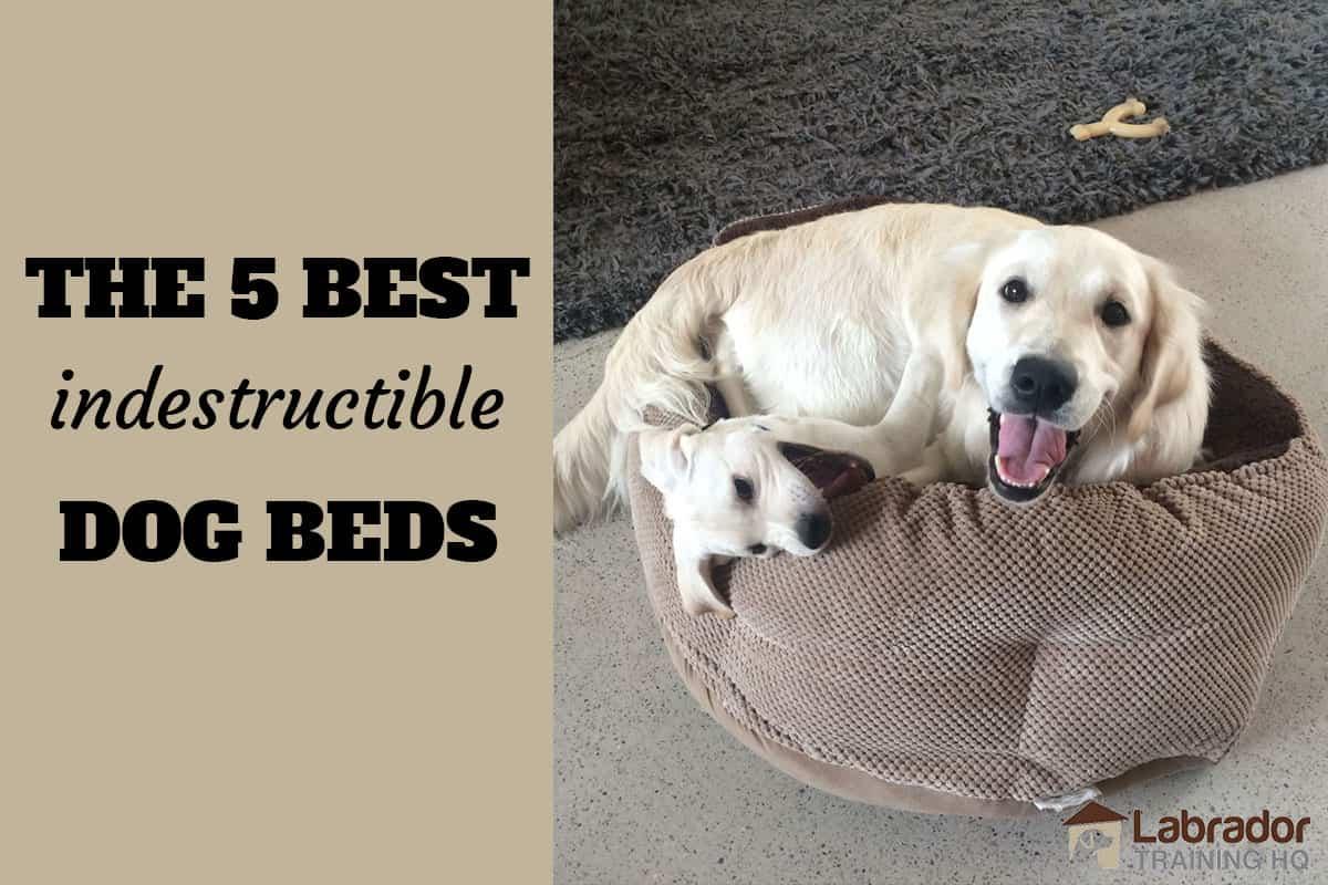 5 Best Indestructible Dog Beds
