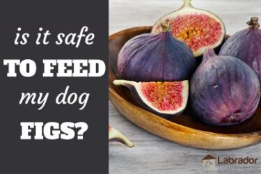 Is It Safe To Feed My Dog Figs?