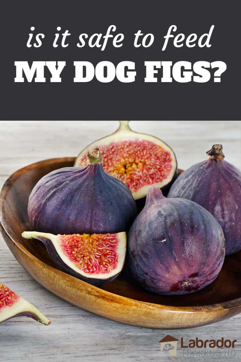 Is It Safe To Feed My Dog Figs - A bowl of figs with a couple cut in half/thirds.