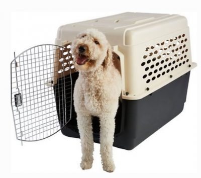 Plastic Dog Crate with Dog Sticking his body out of it.