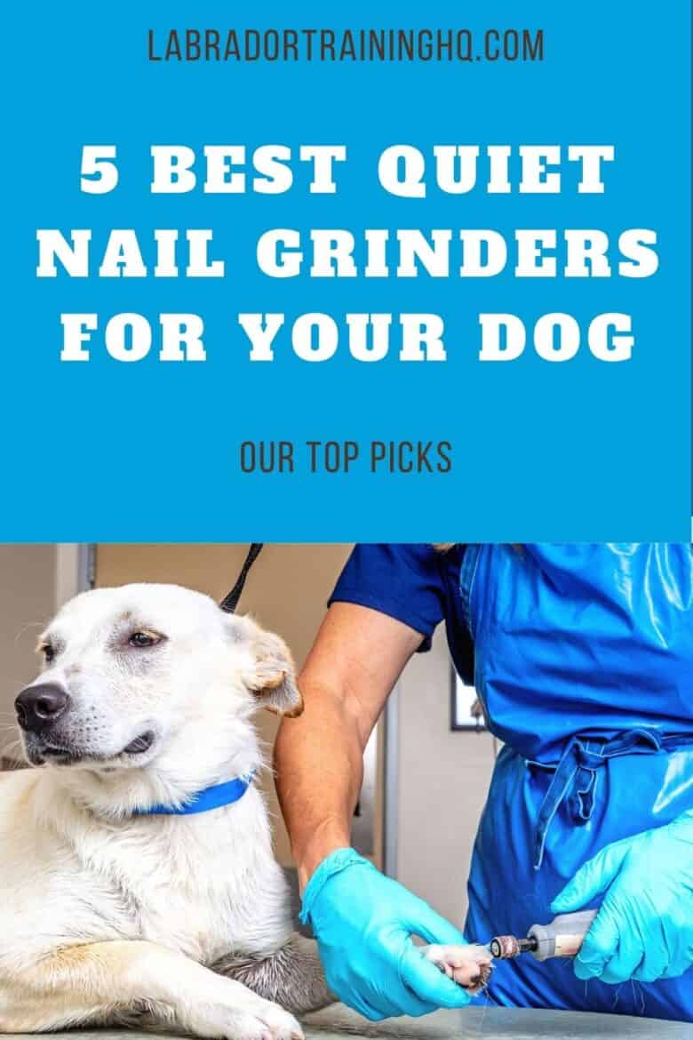 5 Best Quiet Nail Grinders For Your Dog - Our Top Picks - Yellow Lab mix gets his nails trimmed at the vets office.