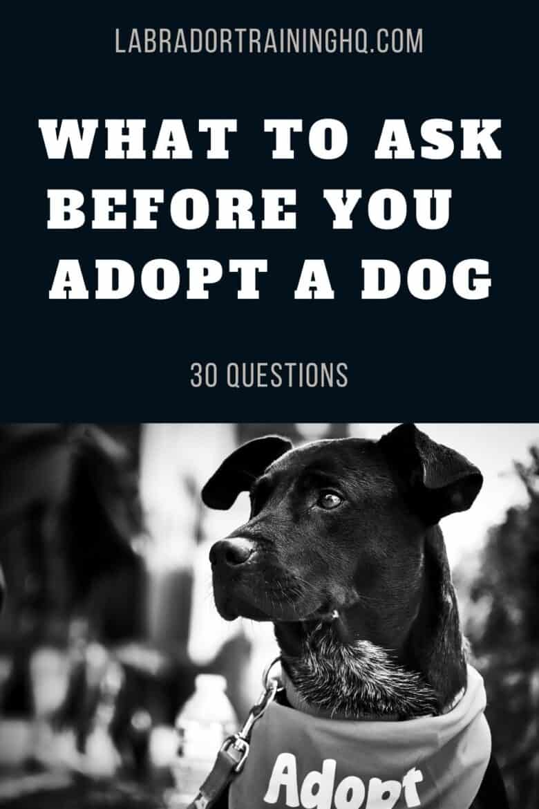 """What To Ask Before You Adopt A Dog - 30 Questions - black dog wearing an """"Adopt"""" bandana"""