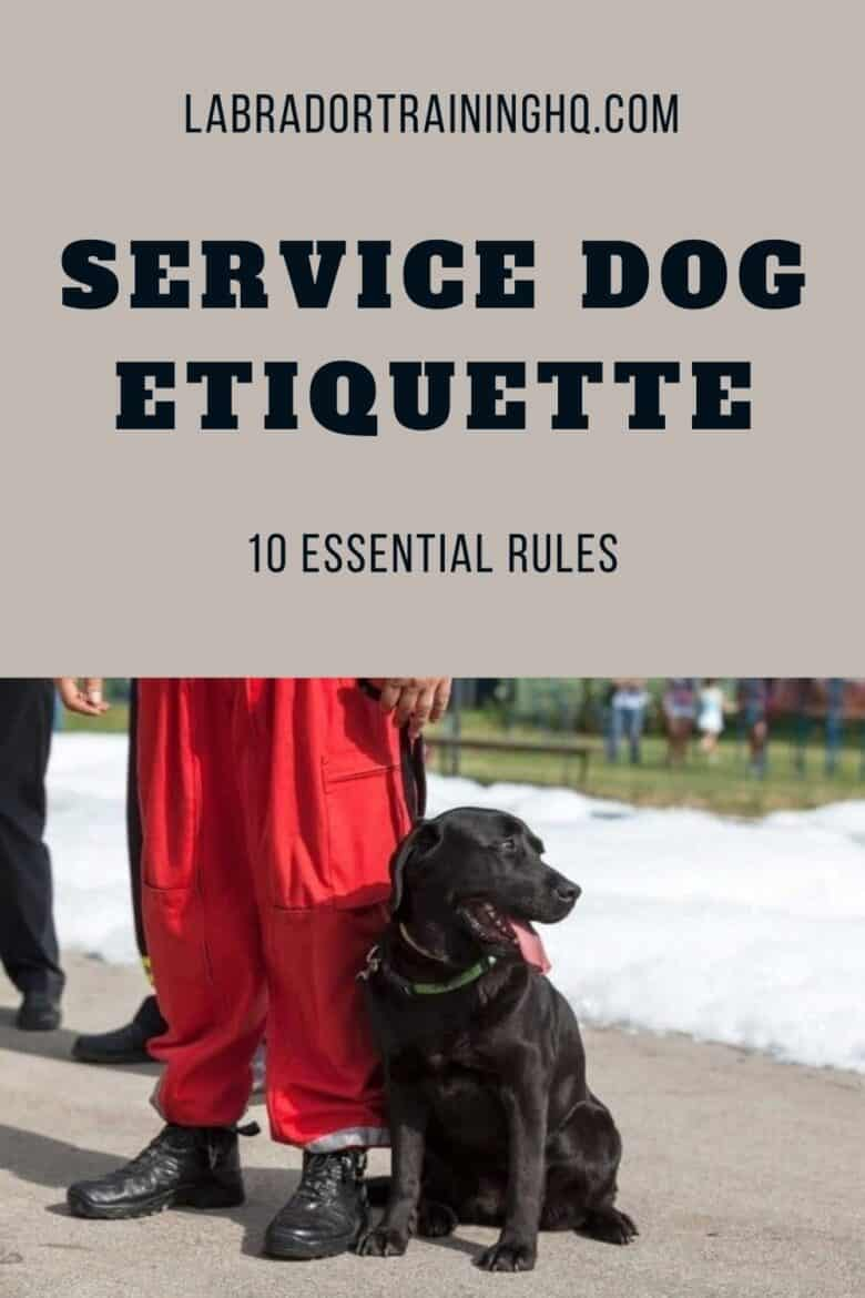 Service Dog Etiquette - 10 Essential Rules - Black Lab sitting in heel position next to person in red pants and black shoes.