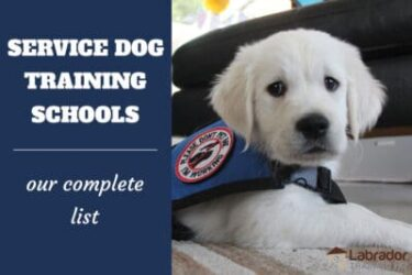 Service Dog Training Schools And How To Train A Service Dog