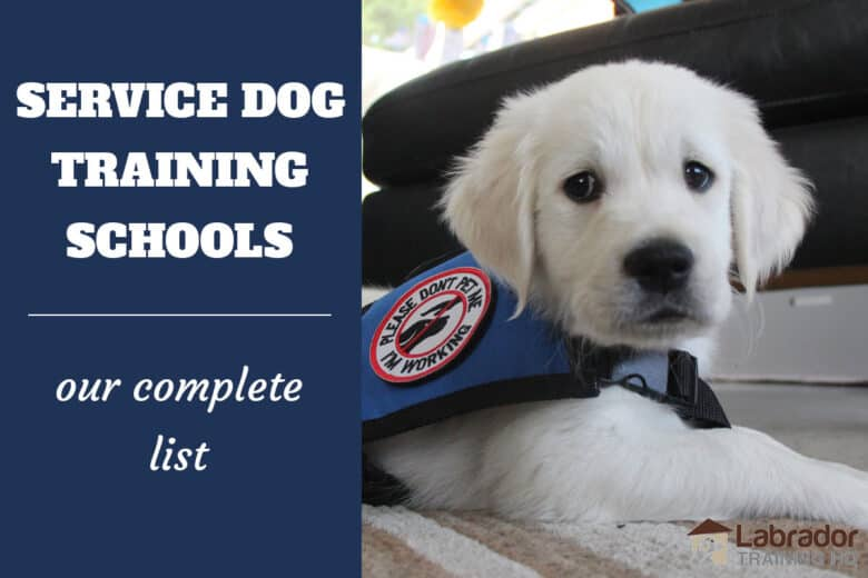 Service Dog Training Schools - Our Complete List - White puppy lying on floor wearing a service dog jacket.