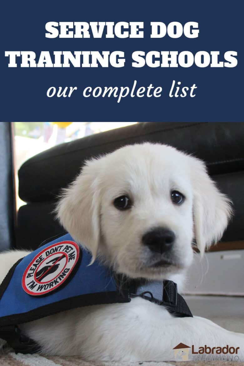 Service Dog Training Schools - Our Complete List - Golden Retriever puppy down on the floor wearing a service dog vest.