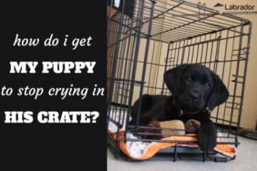 How Do I Get My Puppy To Stop Crying In His Crate At Night?